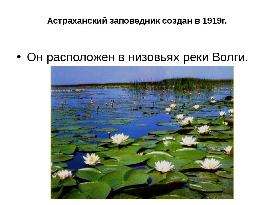 Астраханский заповедник создан в 1919г. Он расположен в низовьях реки Волги.