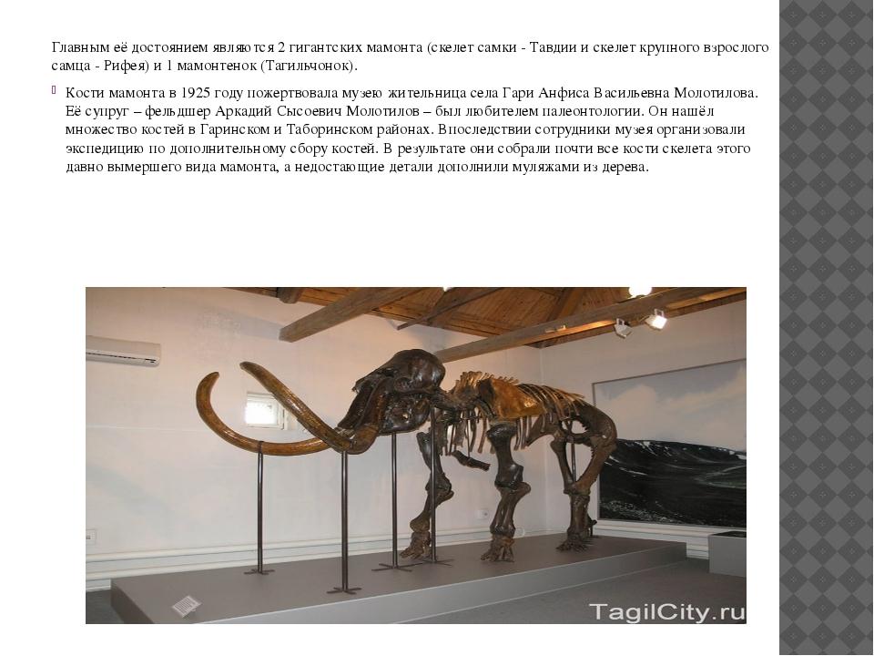 Главным её достоянием являются 2 гигантских мамонта (скелет самки - Тавдии и...