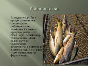Разведением рыбы в прудах занимаются специальные рыбоведческие хозяйства. Ос