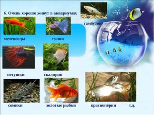 6. Очень хорошо живут в аквариумах гамбузии меченосцы гуппи петушки скалярии
