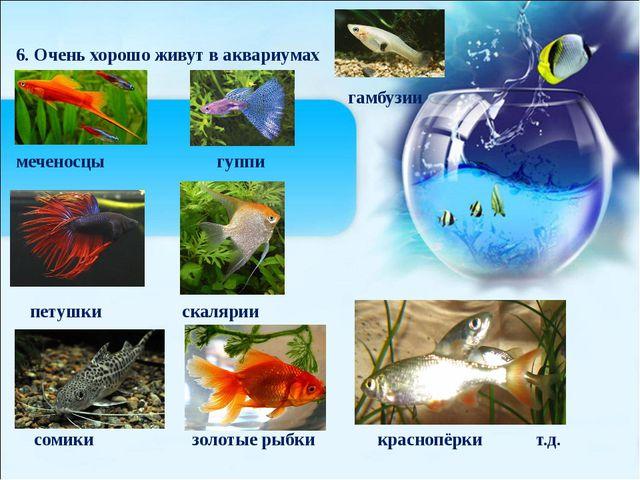 6. Очень хорошо живут в аквариумах гамбузии меченосцы гуппи петушки скалярии...