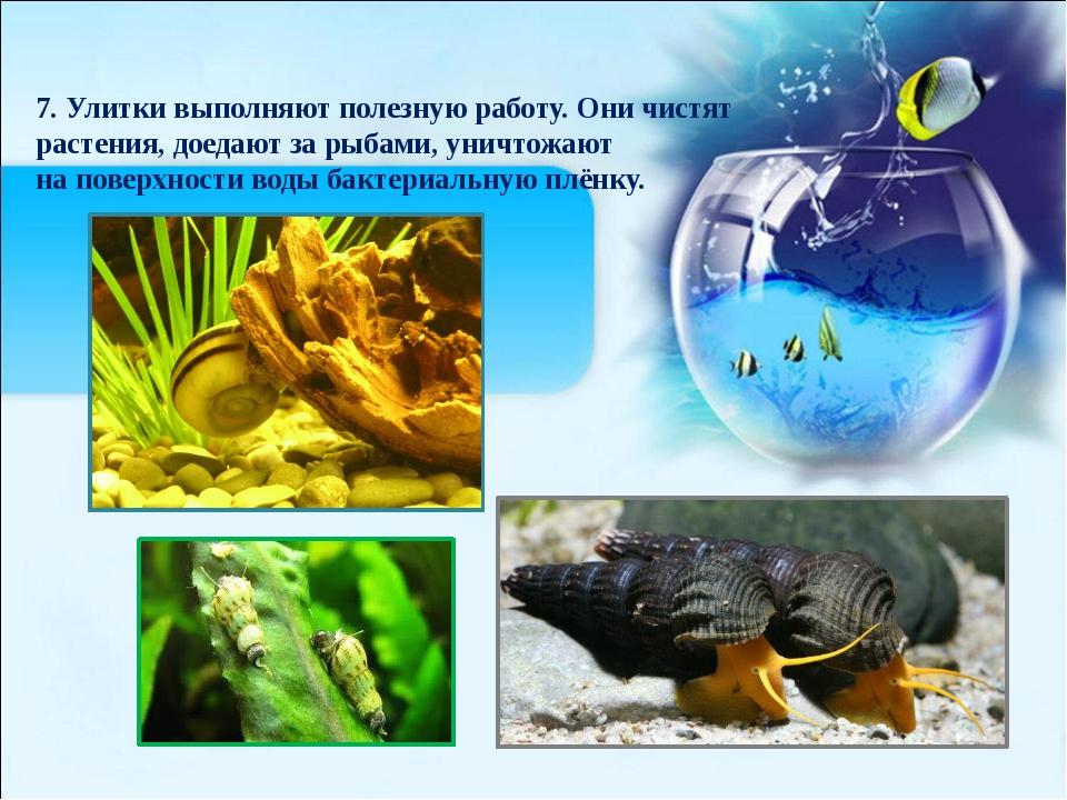7. Улитки выполняют полезную работу. Они чистят растения, доедают за рыбами,...