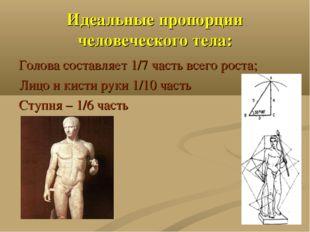 Идеальные пропорции человеческого тела: Голова составляет 1/7 часть всего рос