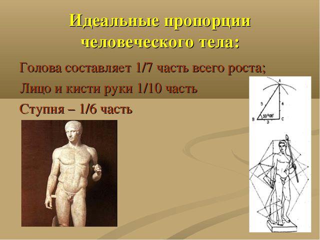Идеальные пропорции человеческого тела: Голова составляет 1/7 часть всего рос...