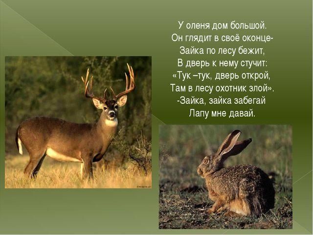 У оленя дом большой. Он глядит в своё оконце- Зайка по лесу бежит, В дверь к...