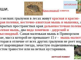 Мыши. Из мелких грызунов в лесах живут красная и красно-серая полевки, восто