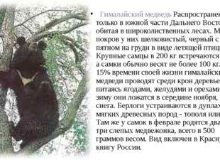 Гималайский медведь Распространен только в южной части Дальнего Востока, об