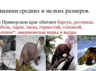 Хищники средних и мелких размеров. В Приморском крае обитают барсук, росомаха