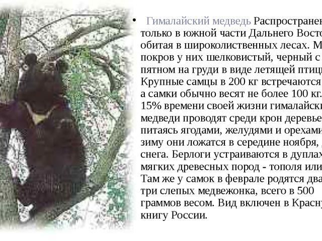 Гималайский медведь Распространен только в южной части Дальнего Востока, об...