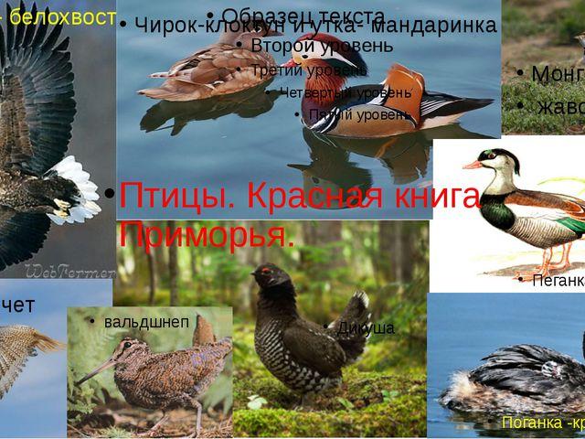 Чирок-клоктун и утка- мандаринка кречет Монгольский жаворонок Пеганка хохлат...