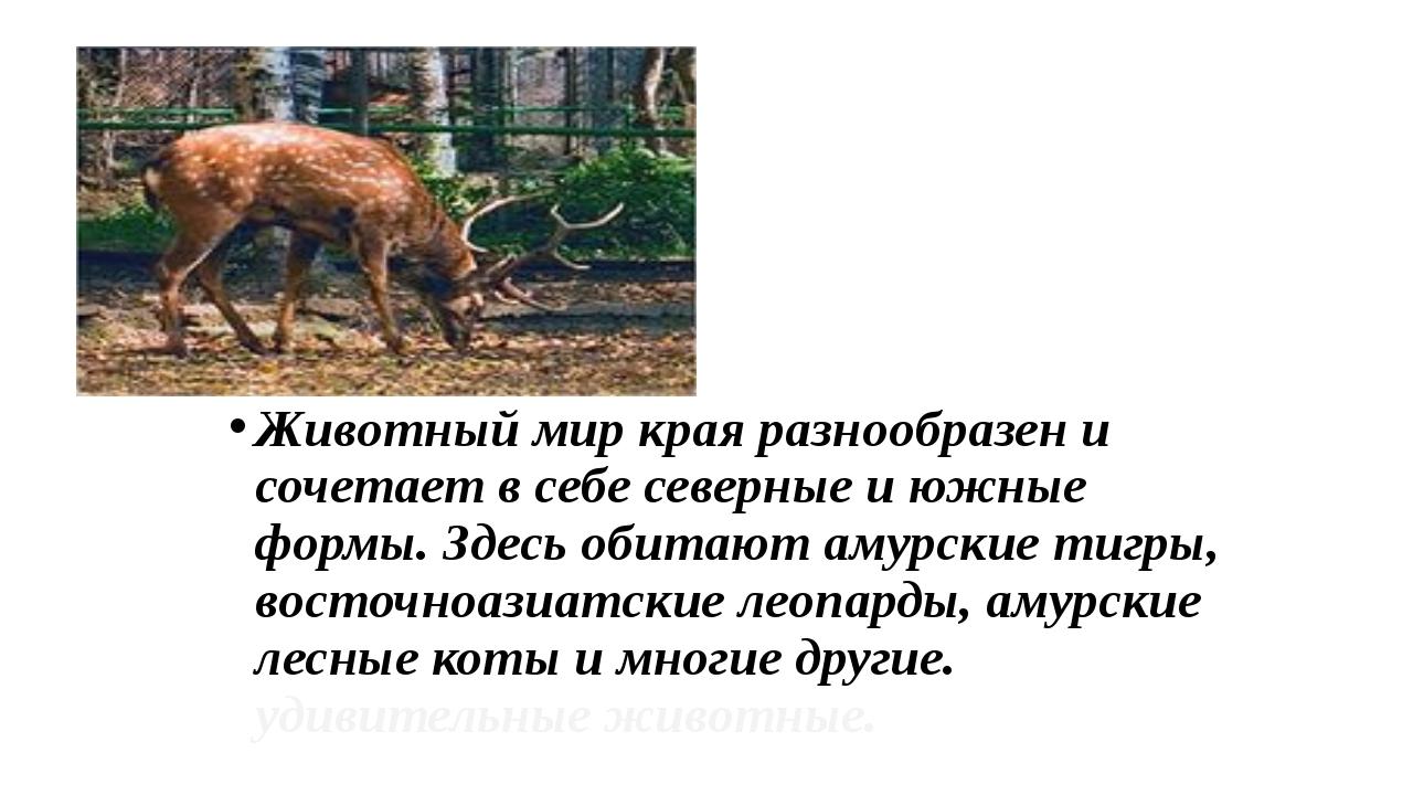 Животный мир края разнообразен и сочетает в себе северные и южные формы. Здес...