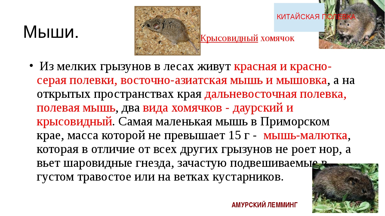 Мыши. Из мелких грызунов в лесах живут красная и красно-серая полевки, восто...