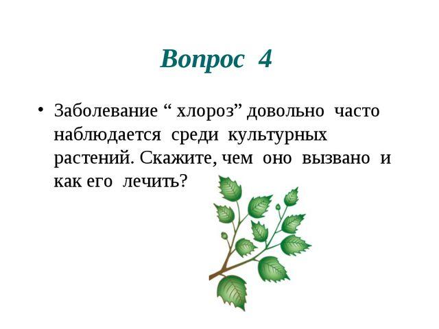"""Вопрос 4 Заболевание """" хлороз"""" довольно часто наблюдается среди культурных ра..."""