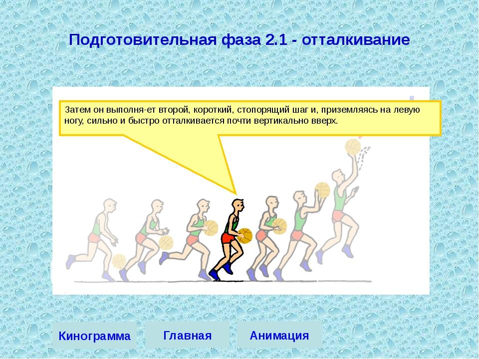 Затем он выполняет второй, короткий, стопорящий шаг и, приземляясь на левую...