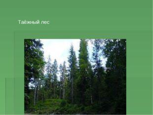 Таёжный лес