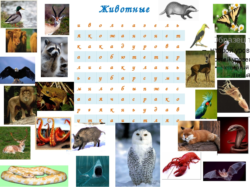 Животные и в о л г а з е л ь я к о ж а н о н е т к а к а д у р о в а а г о б...