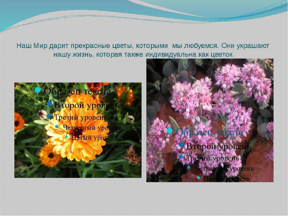 Наш Мир дарит прекрасные цветы, которыми мы любуемся. Они украшают нашу жизнь...