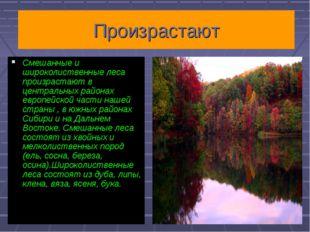 Произрастают Смешанные и широколиственные леса произрастают в центральных рай