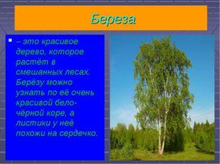 Береза – это красивое дерево, которое растёт в смешанных лесах. Берёзу можно
