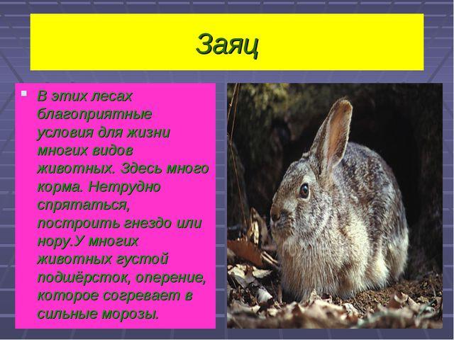 Заяц В этих лесах благоприятные условия для жизни многих видов животных. Здес...
