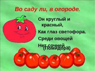 Во саду ли, в огороде. Он круглый и красный, Как глаз светофора. Среди овощей
