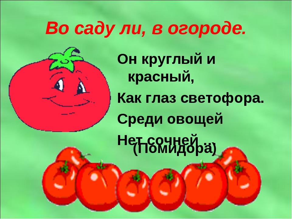 Во саду ли, в огороде. Он круглый и красный, Как глаз светофора. Среди овощей...