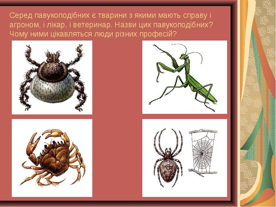 Серед павукоподібних є тварини з якими мають справу і агроном, і лікар, і вет...