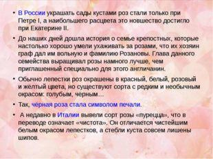 В России украшать сады кустами роз стали только при Петре I, а наибольшего ра