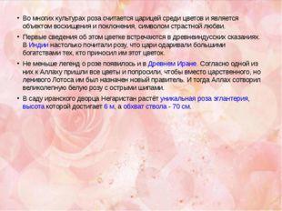 Во многих культурах роза считается царицей среди цветов и является объектом в