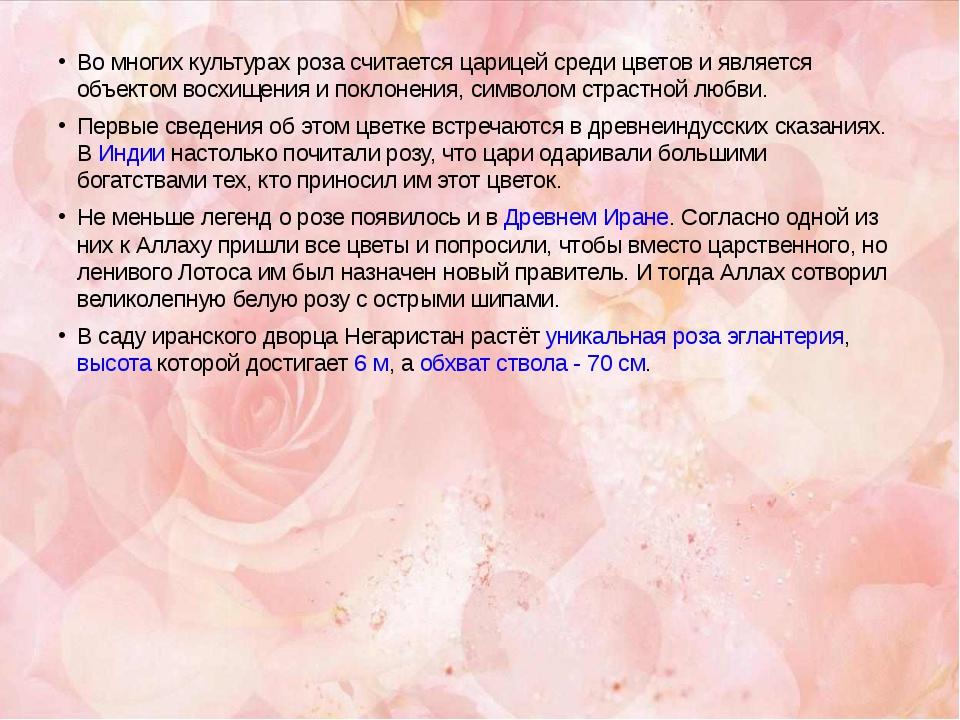 Во многих культурах роза считается царицей среди цветов и является объектом в...
