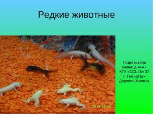 Редкие животные Подготовила ученица 4«А» КГУ «ОСШ № 32 г. Темиртау» Доронич М