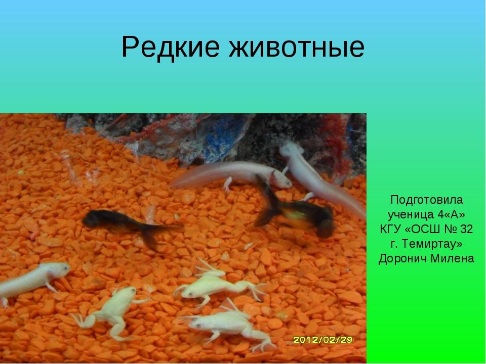 Редкие животные Подготовила ученица 4«А» КГУ «ОСШ № 32 г. Темиртау» Доронич М...