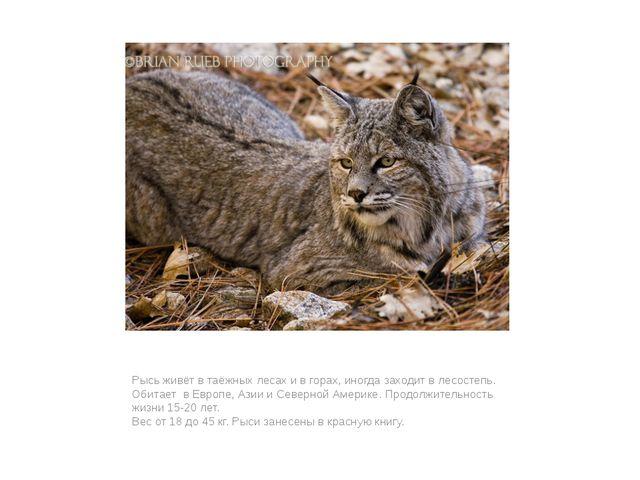 Рысь живёт в таёжных лесах и в горах, иногда заходит в лесостепь. Обитает в Е...