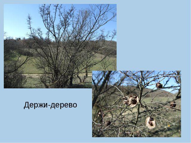 Держи-дерево