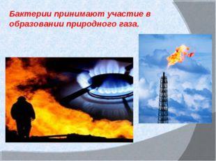 Бактерии принимают участие в образовании природного газа.