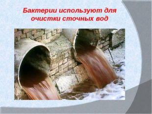 Бактерии используют для очистки сточных вод