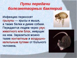 Пути передачи болезнетворных бактерий Инфекцию переносят грызуны— крысы им
