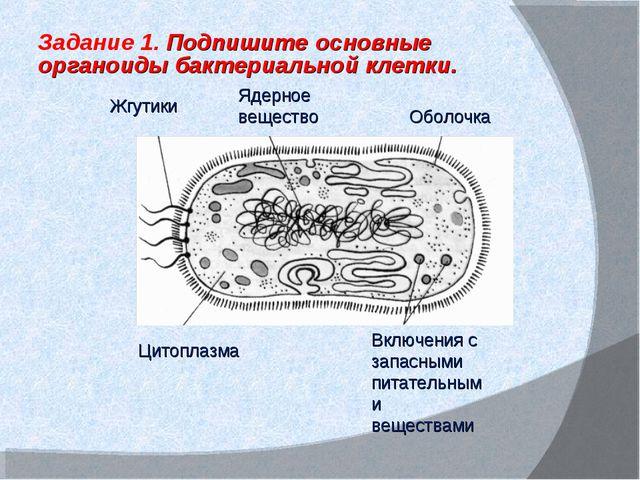 Включения с запасными питательными веществами Ядерное вещество Жгутики Цитопл...