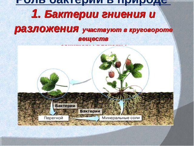 Роль бактерий в природе 1. Бактерии гниения и разложения участвуют в кругово...