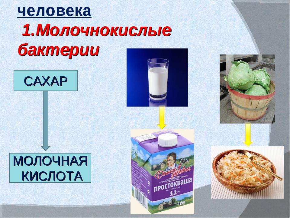 Роль бактерий в жизни человека 1.Молочнокислые бактерии САХАР МОЛОЧНАЯ КИСЛОТА