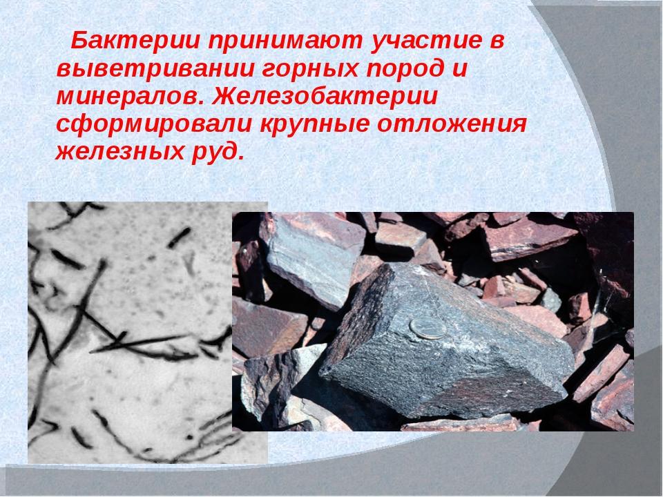 Бактерии принимают участие в выветривании горных пород и минералов. Железоба...