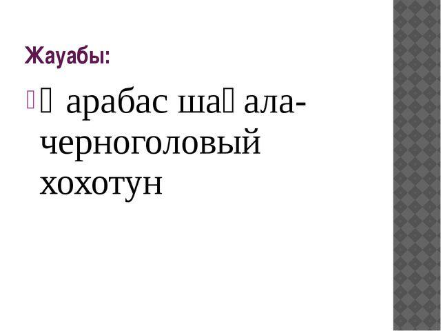 Жауабы: Қарабас шағала-черноголовый хохотун