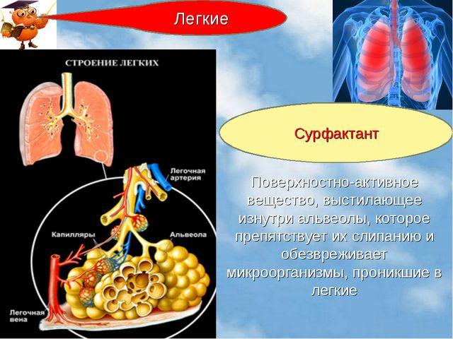 Поверхностно-активное вещество, выстилающее изнутри альвеолы, которое препятс...