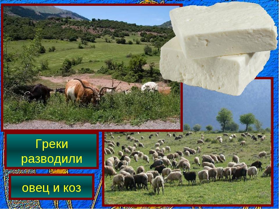 Греки разводили овец и коз