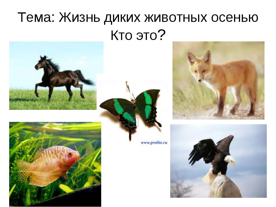 Тема: Жизнь диких животных осенью Кто это?