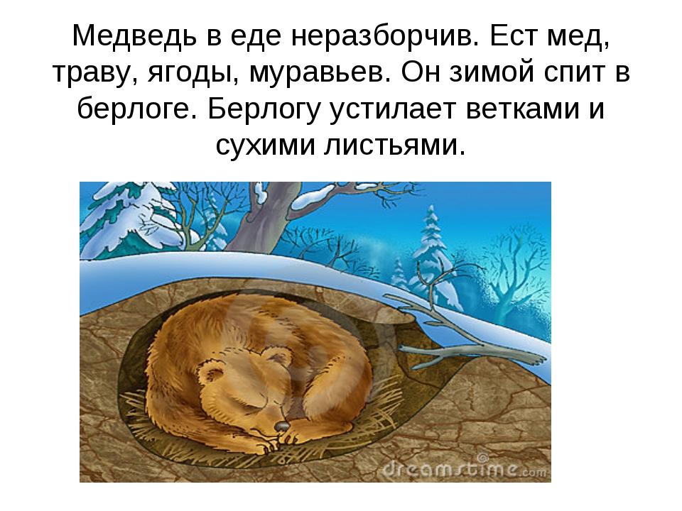 Медведь в еде неразборчив. Ест мед, траву, ягоды, муравьев. Он зимой спит в б...