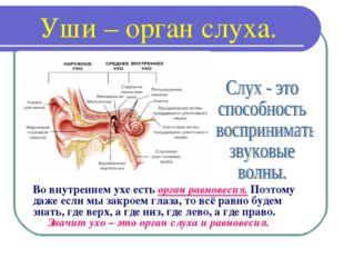 Уши – орган слуха. Во внутреннем ухе есть орган равновесия. Поэтому даже если