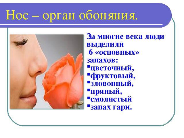 Нос – орган обоняния. За многие века люди выделили 6 «основных» запахов: цвет...