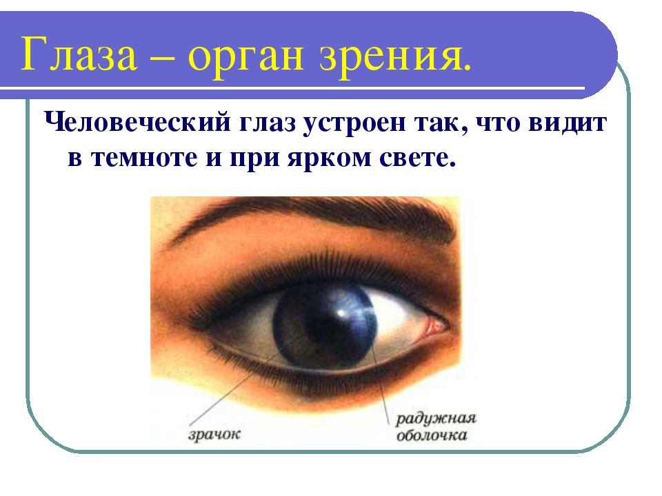 Глаза – орган зрения. Человеческий глаз устроен так, что видит в темноте и пр...