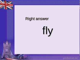 Right answer fly